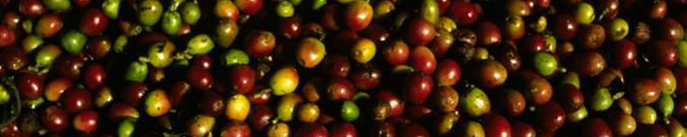 Coffee Cherries banner