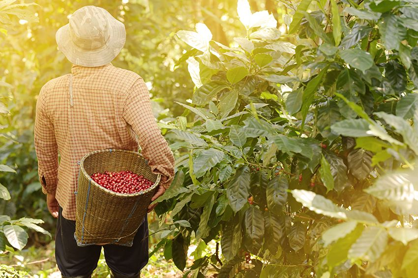 man with woven basket of red beans on back